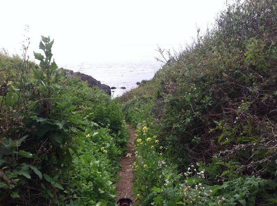Kirk Creek Campground: trail to beach with wildflowers!