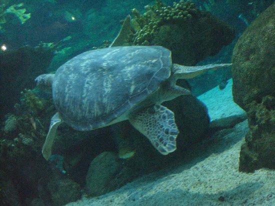 Meduse foto di acquario di genova genova tripadvisor for Tartaruga da acquario