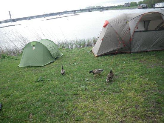 Camping Zeeburg: Coin Coin