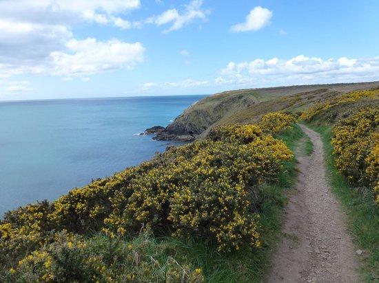 Ardmore Adventures: Ardmore Cliff Walk