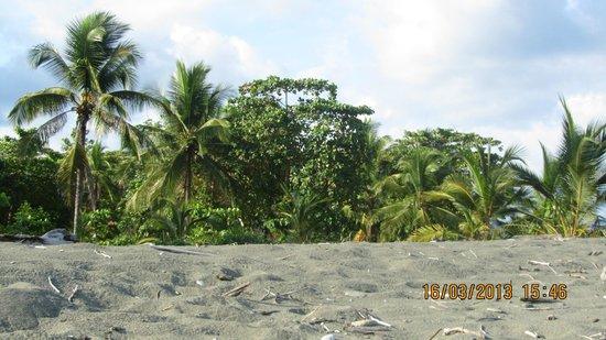 Las Islas Lodge: La plage