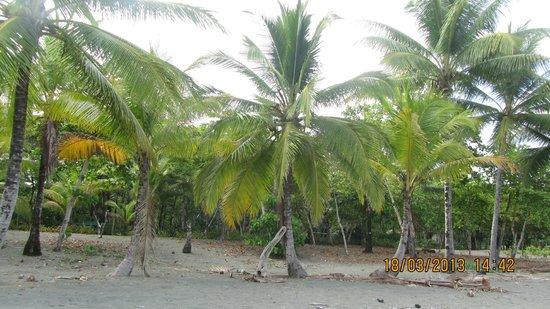 Las Islas Lodge : Une des plages de Puerto Jimenez