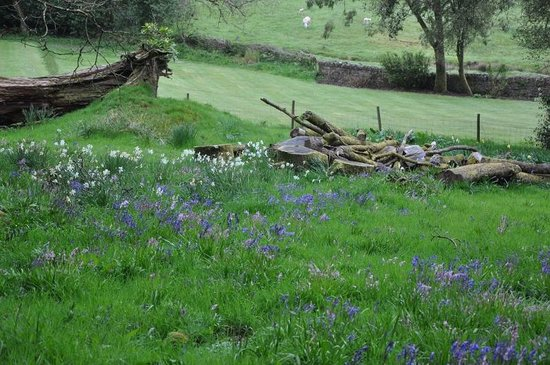 Bracken House: Bluebells in the garden