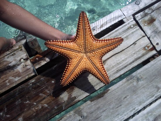 Iberostar Daiquiri: Starfish!