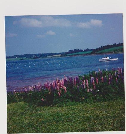 Cois Farraige: Shore Frontage