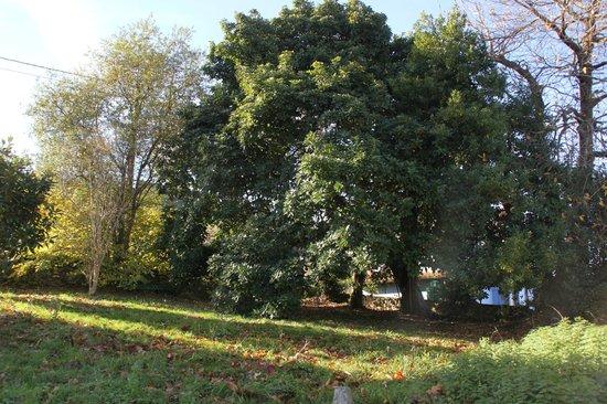 Casa Rural La Boleta: Arboles centenarios en el jardín de la Boleta