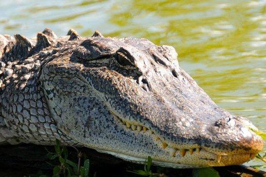 Cajun Country Swamp Tours: Smile!