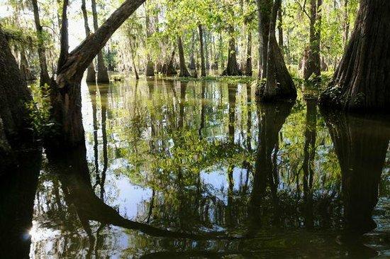 Cajun Country Swamp Tours: Up the bayou