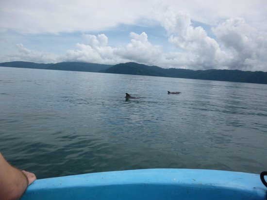 Playa Nicuesa Rainforest Lodge: Lots of dolphins! I think we saw 20 or more...