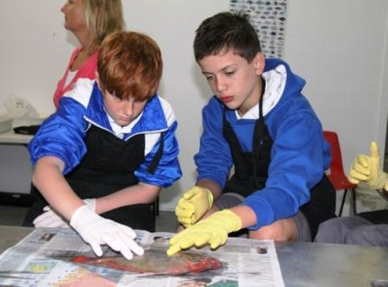 Sapphire Coast Marine Discovery Centre: Local students doing a fish dissection