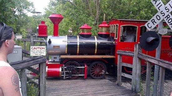 Gatorland: The train