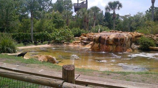 Gatorland: Crocodiles at rest
