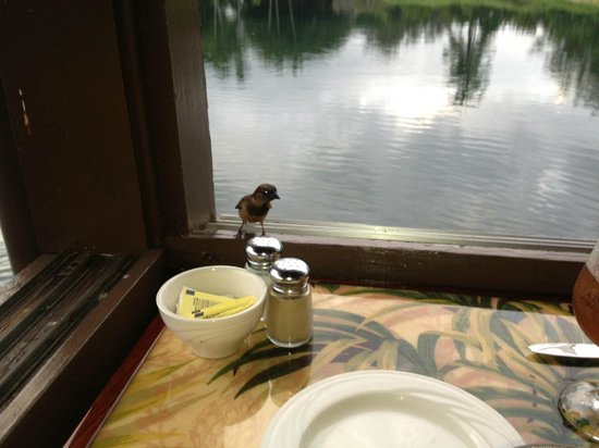 Ponds: friendly finch