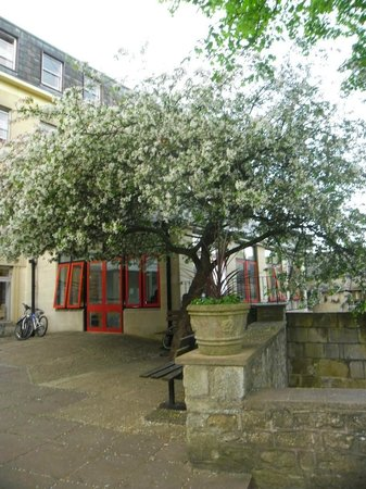 Bath YMCA: Beautiful tree in blossom at entrance