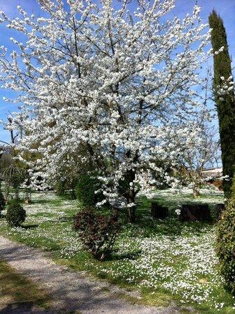 Relais San Bruno: Splendido giardino in fiore