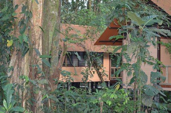 Rana Roja Lodge: hotel