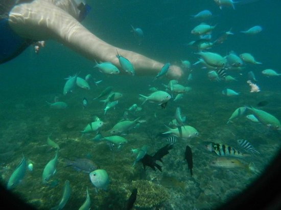 Nacula Island, Fiji: FEEDING THE LOCALS
