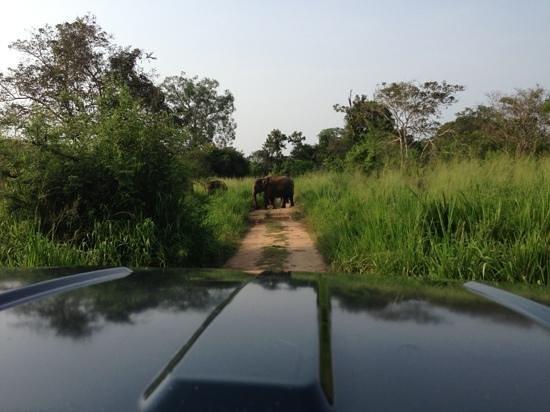 Foto de Wasgamuwa National Park