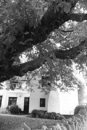 The King's Head: The old chestnut tree in the garden