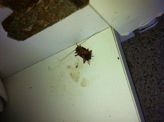 Koka Apartments: Another KOKA Roach Under The Sink