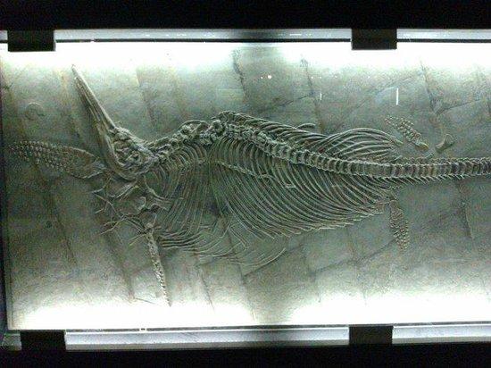 Naturmuseum Senckenberg: Ictiosaurio