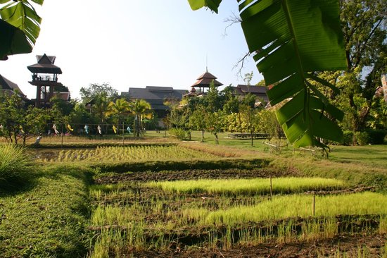 Siripanna Villa Resort and Spa Chiang Mai: View to hotel and garden, from the hotel's rice paddies