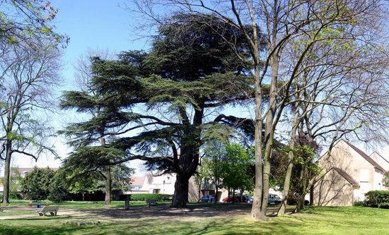 Parc du Cedre