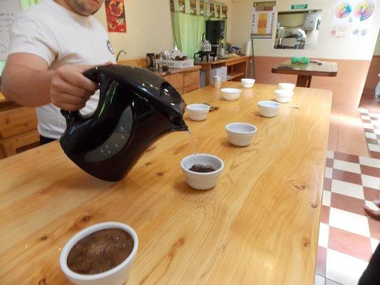 Santa Elena Cooperative Coffee Tours: Der er linet op til prøveduftninger