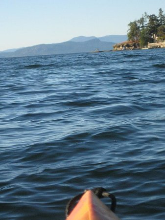 Pacific Shores Resort and Spa: Kayaking in Nanoose Bay