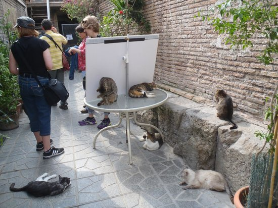 Largo di Torre Argentina: cats cats and more cats