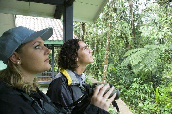 Rainforest Adventure Lodge: Bird Watching