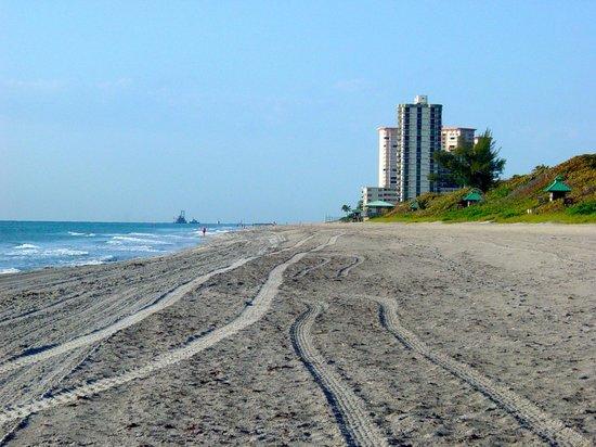Ocean Lodge: Beach view across street