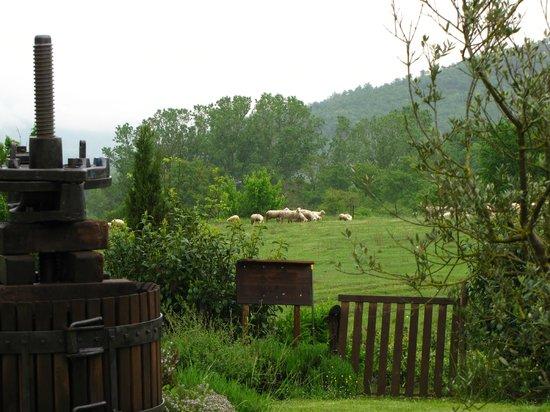 Villa Martis: Вид из окна