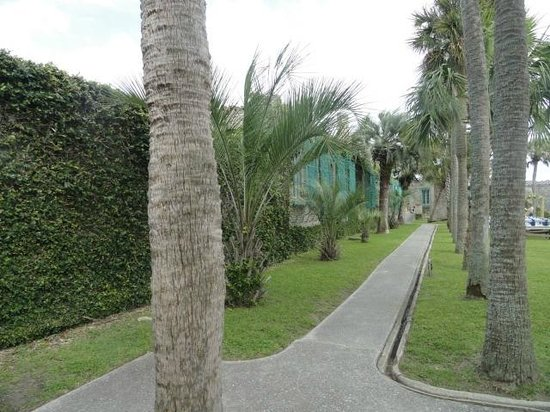 Atalaya Castle: Palm trees lining walkway