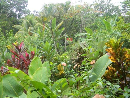 Phidjie Lodge : Vue du jardin aux parfums si agréables