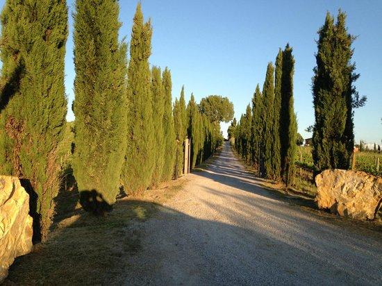 Villa Nottola: viale di ingresso