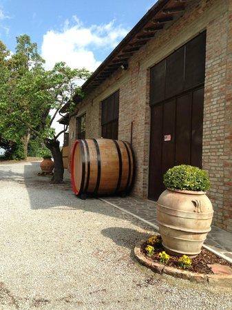 Villa Nottola: la cantina