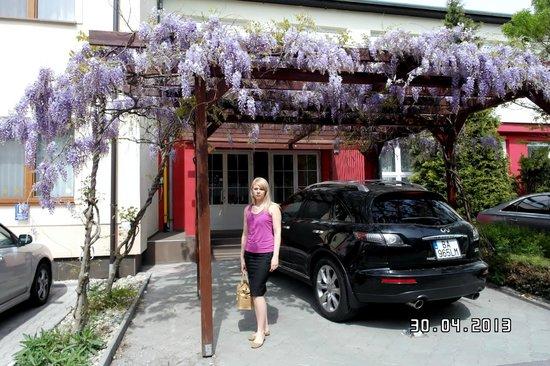 Hotel Viktor: У входа в отель