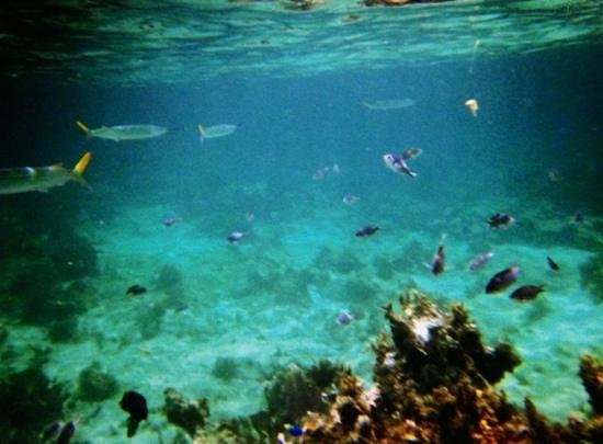 Hotel Riu Palace Tropical Bay: snorkeling