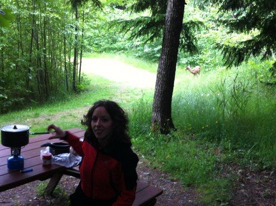Free Spirit Spheres: cena nel bosco