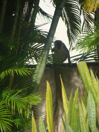 Little Good Harbour: Monkeys!!