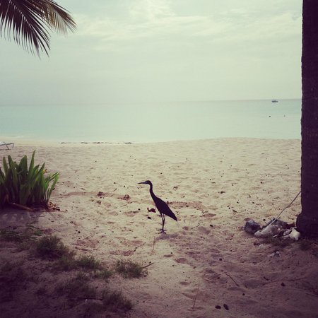 Cottages By The Sea: heron on the beach