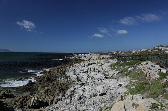 Stony Point Penguin Colony: Rocks