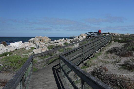 Stony Point Penguin Colony: Boardwalk