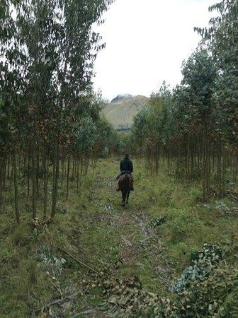 Hacienda Cusin: A ride through the eucalyptus