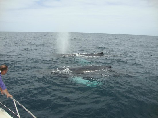Sal Rei, Cape Verde: Whale Watching - no stress whales!