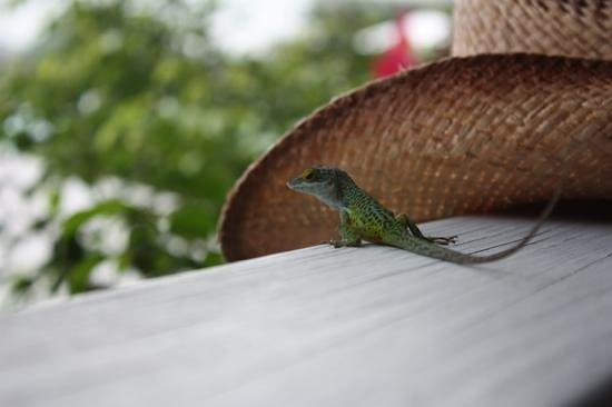 Cocobay Resort: our new friend. joined us for breakfast!
