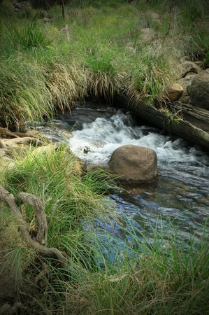 Mt Barney Lodge Country Retreat: mt. barney creek