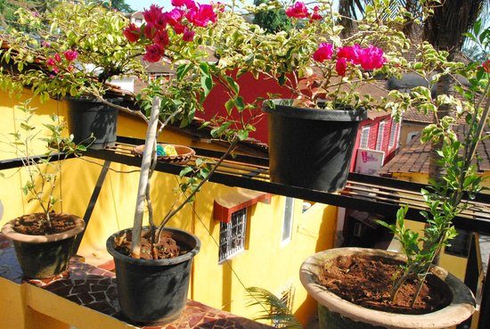Afonso Guest House : Flowers at roof top terrace