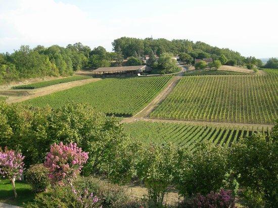 Chateau de la Riviere: Vignoble